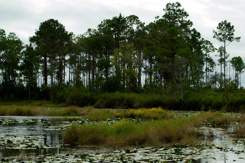 Lake Blossom at Etoniah Creek State Forest