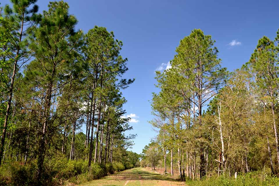 Trail at Caravelle Ranch Wildlife Management Area