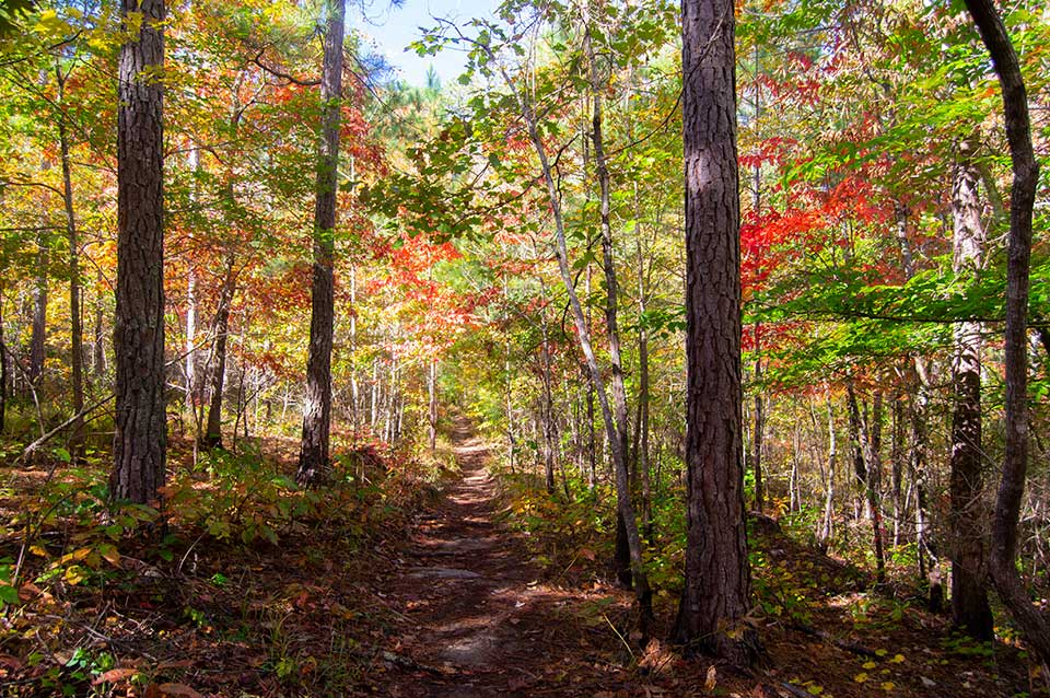 Forest in Autumn in Alabama, Talladega National Forest