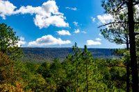 Talladega National Forest