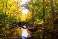 Creek Through Forest in Autumn