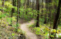Hiking and biking trail at Cochran Mill Park, Georgia