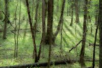Woods in rising sun in spring