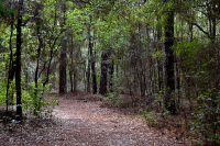 Creek Sink Trail for hiking at San Felasco Hammock Preserve State Park