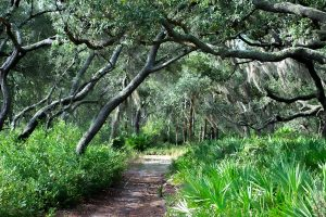 Forest Trail in Florida