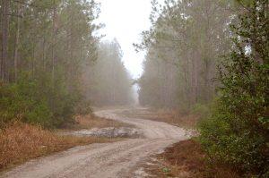 Florida Trail in Putnam Along FL 19