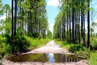 Hiking Florida Trail in Palatka, Summer
