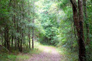 George's Lake Trail at Etoniah Creek State Forest