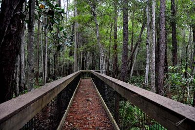 Walking Bridge over Marsh at Treefrog Trail, Lake Alto