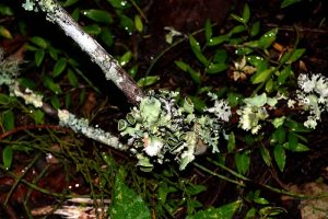 Fungi in marsh