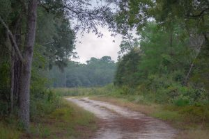 Unpaved Fieldhouse Road at Etoniah Creek State Forest
