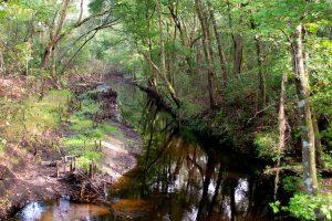 Etoniah Creek