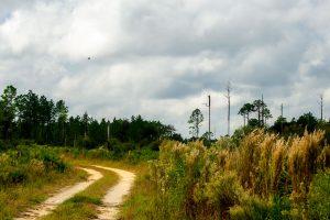Multi-Use Trail at Etoniah Creek State Forest
