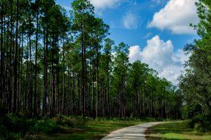 Pine in broad daylight along trail