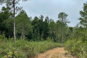 Hiking Price's Scrub State Park in Micanopy, FL
