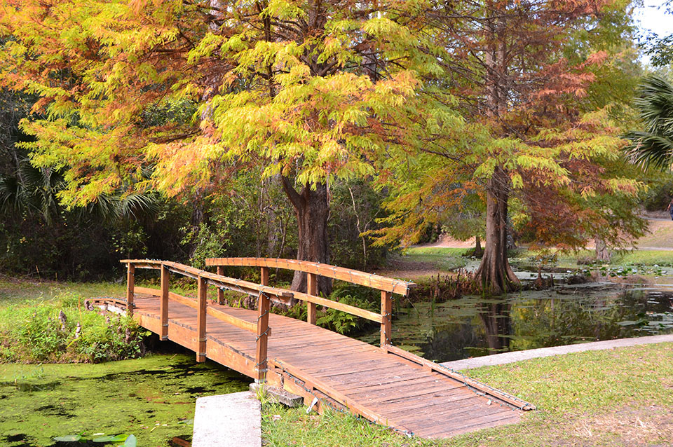 Walking bridge over creek in autumn, Florida