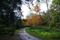Trail in Ravine Gardens State Park