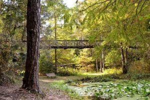 Wooden Suspension Bridge in Autumn