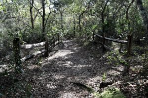 Fence and land bridge over the creek