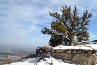 Pine tree in snow atop Scotts Bluff National Monument