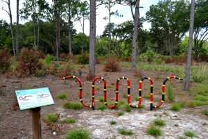 Coral snake bike rack at East Trail entrance, Sweetwater Preserve, for those biking the Gainesville-Hawthorne Bike Trail