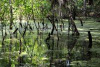 Swamp at Sweetwater Preserve