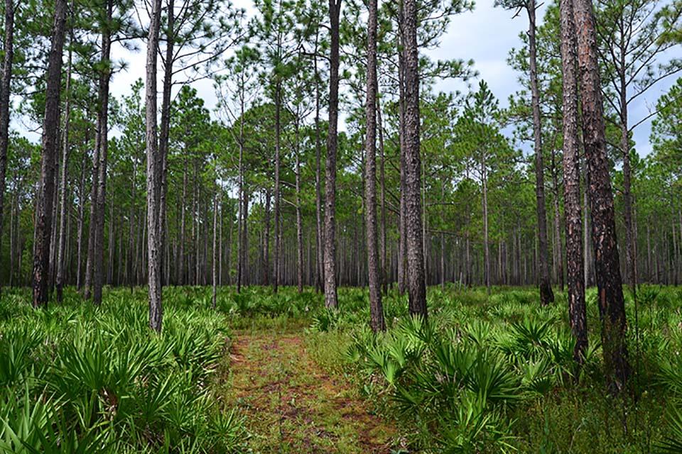 Trail at LEAFS Stewardship Forest