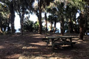 Orange Point campground in Welaka State Forest offers primitive camping along Little Lake George