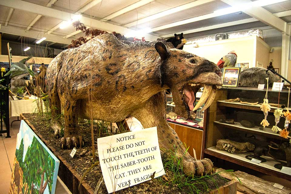 Recreation of Saber Toothed Tiger at West Georgia Museum