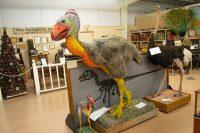 Diatryma, late Paleocene and Eocene epoch bird to 7 feet tall